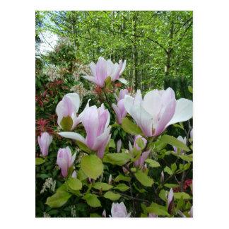 Magnolien-Blume Postkarte