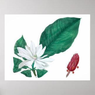 Magnolien-weißer großer Blumen-Druck horizontal Poster