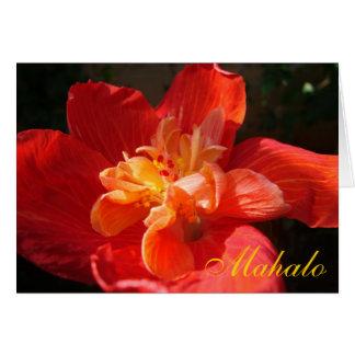Mahalo Rot-Orange-Gelber Hibiskus Karte