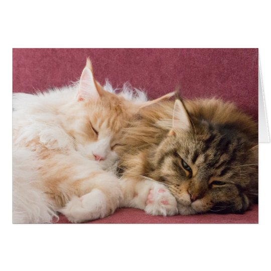 Maine Coon cats greeting card Karte