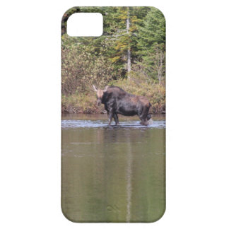 Maine-Kuh-Elche iPhone 5 Etui