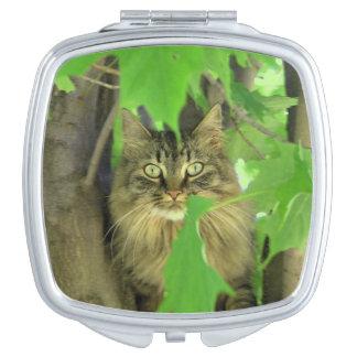 Maine-Waschbär-Katze im Baum Schminkspiegel