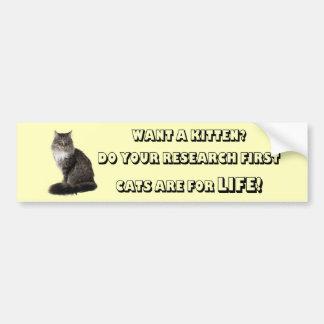 Maine-Waschbär-Katzen sind für das Leben Autoaufkleber