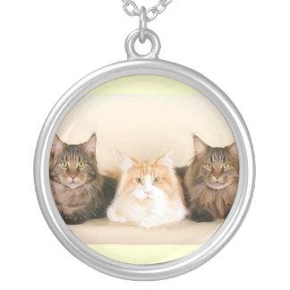 Maine-Waschbär-Katzenhalskette Versilberte Kette