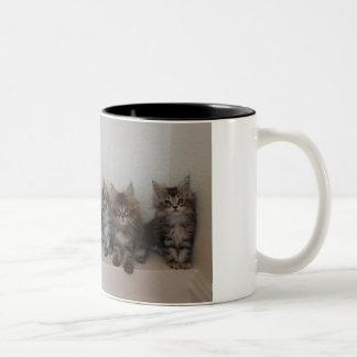 Maine-Waschbärkätzchen Tasse