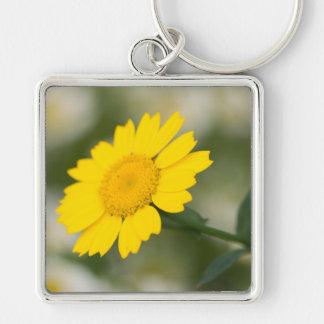 Mais-Ringelblume Schlüsselanhänger