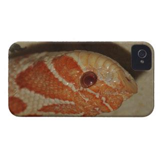 Maisschlange iPhone 4 Hülle