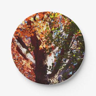 Majestätische Ahornbäume - erste Ansicht der Pappteller