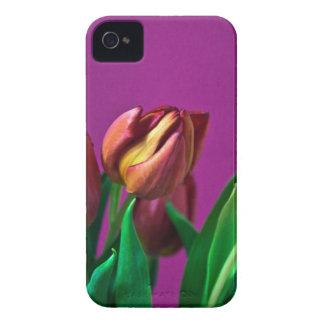 Majestätische Eleganz iPhone 4 Cover