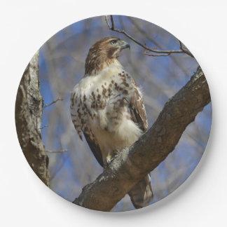 Majestätischer Falke Pappteller