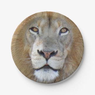 Majestätischer Löwe-nahes hohes Pappteller