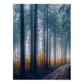 Majestätischer Waldweg Postkarte