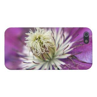 Makro lila Clematis-Blume Etui Fürs iPhone 5