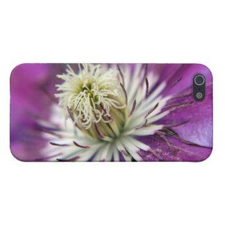 Makro lila Clematis-Blume iPhone 5 Etui