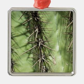 Makro nah oben von den Kaktusdornen Silbernes Ornament