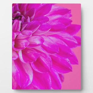Makrobild der Blumendahlie auf rosa backgroun Fotoplatte