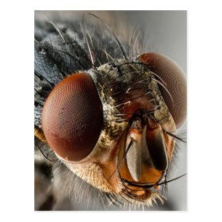 MakroFoto einer Fliege Postkarte
