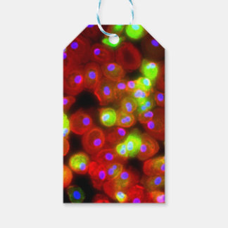 Makrophage-Zellen-Wissenschafts-Kunst Geschenkanhänger
