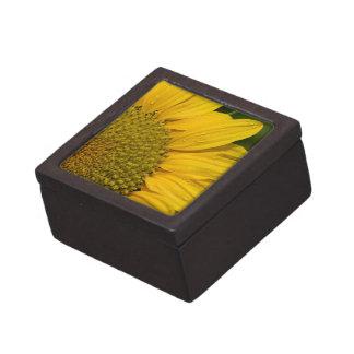 Makrosonnenblume mit Regentropfen Schachtel