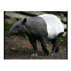 Malaiischer Tapir-Postkarte Postkarte