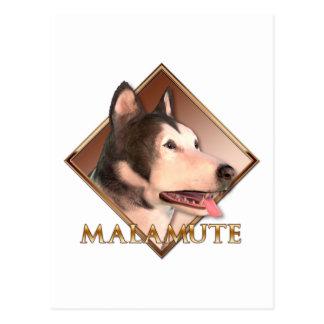Malamute-Schlittenhund Postkarte