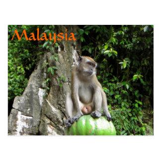 Malaysischer Affe Postkarte