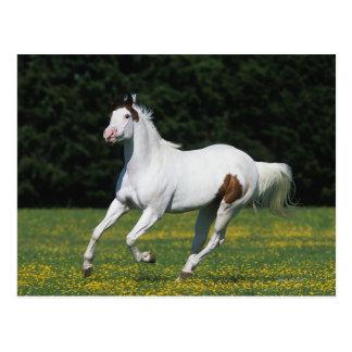 Malen Sie das Pferd, das in grasartiges Feld läuft Postkarte