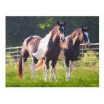 Malen Sie Pferde in der Weide Postkarten