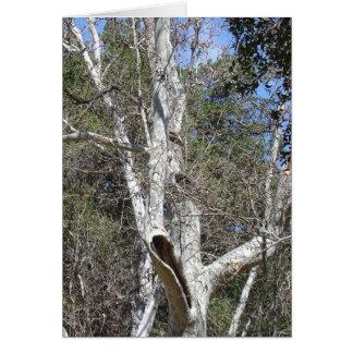 Malibu-Nebenfluss-Baum Karte