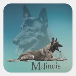 Malinois - belgischer Schäfer - Mechelaar - Quadratischer Aufkleber