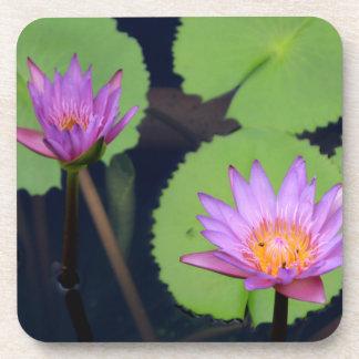 Malvenfarbene rosa Wasserlilien Getränkeuntersetzer
