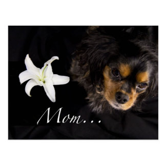 Mamma-… unbekümmerter Königcharles Spaniel Postkarte