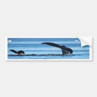 Mamma-und Baby-Wale Tails.jpg Autoaufkleber