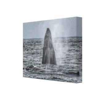 Mamma und Durchbrechen der Kalbbuckelwal-Leinwand Leinwanddruck