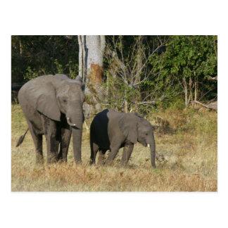 Mamma und glückliche Elefant-Kalb-Postkarte Postkarte