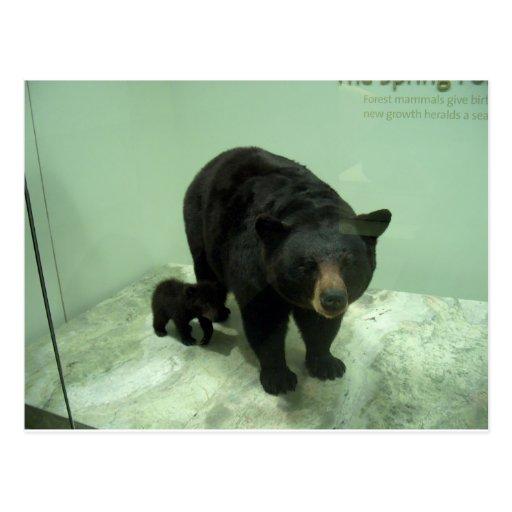 Mamma und Junges des schwarzen Bären Postkarten