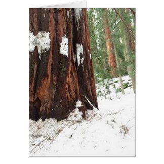 Mammutbaum im Schnee Karte