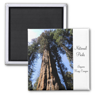 Mammutbaum/Nationalpark-Magnet König-Canyon Quadratischer Magnet