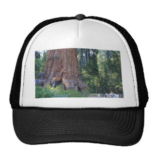 Mammutbäume Forrests Barken-Zäune Truckermütze