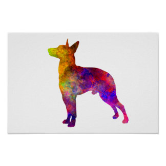 Manchester Terrier im Watercolor Poster
