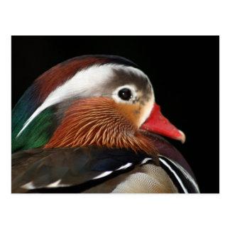 Mandarinen-Ente Postkarte