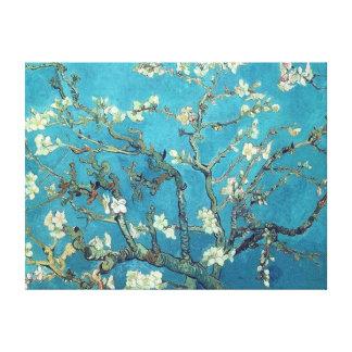 Mandel-Blüten Gespannter Galerie Druck