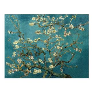 Mandel-Blüten-Postkarte Postkarten