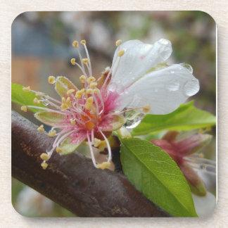 Mandelblüte im Regen Untersetzer
