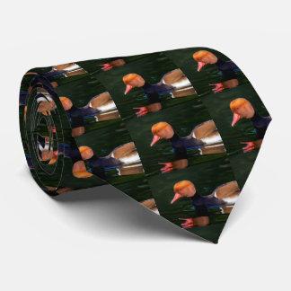 Männliche Tafelente mit rotem Schopf, netta Krawatten