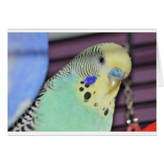 Männlicher Budgie/Parakeet Karte