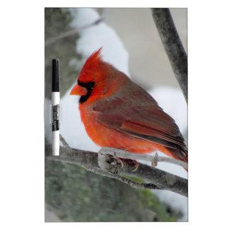 Männlicher Kardinal im Winter Trockenlöschtafel