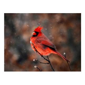 Männlicher Kardinals-Vogel Postkarte