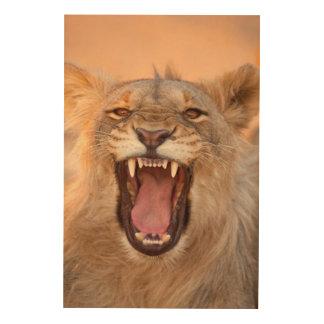 Männlicher knurrender Löwe Holzdruck