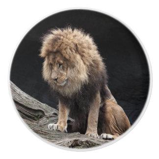Männlicher Löwe Keramikknauf